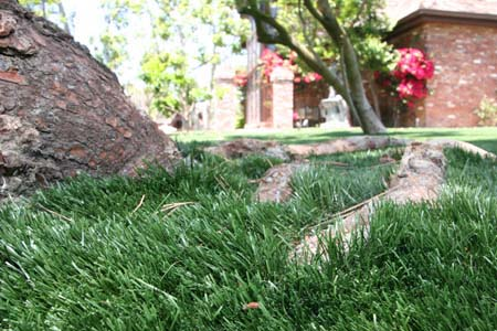 Landscape Gallery - Artificial Turf Supply
